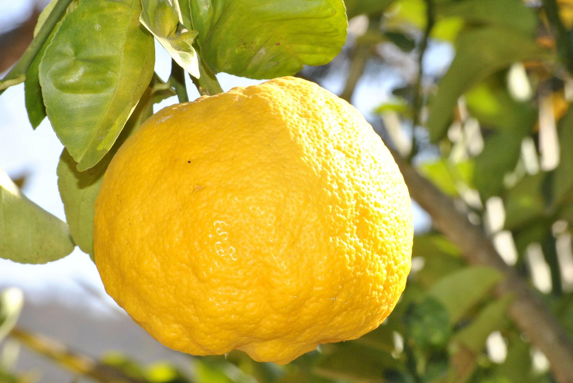 lemon-181650_1920